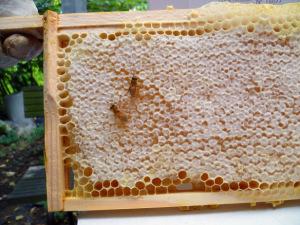 Covered honey